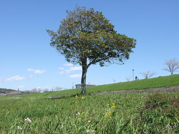 令和の樹.jpg