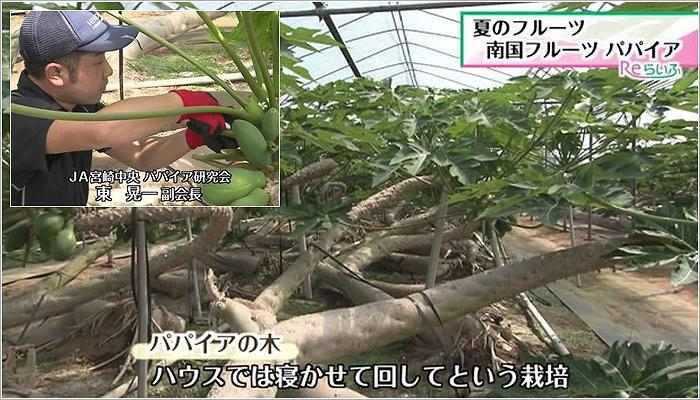 02 パパイアの木/東晃一さん