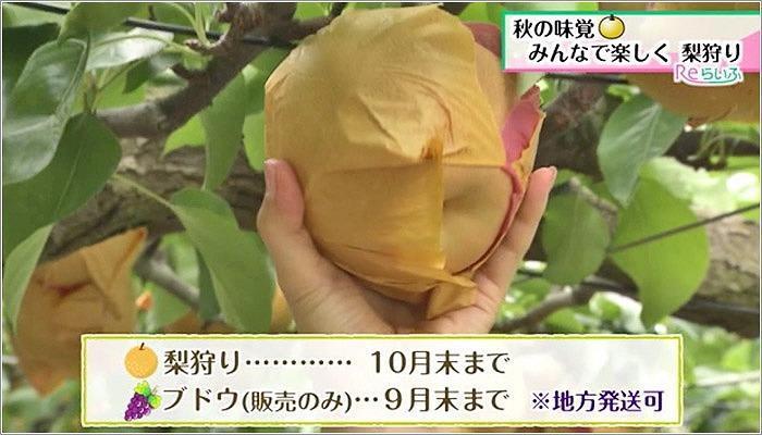 07 小原(こばる)梨園の営業期間