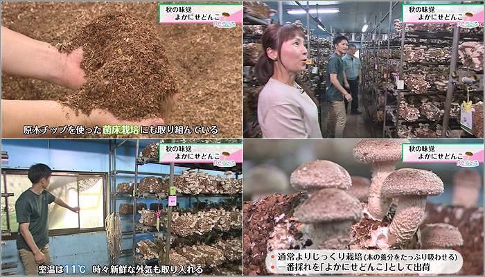 05 菌床栽培