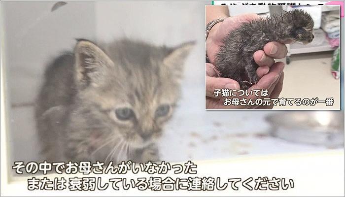 04 子猫の保護に関して