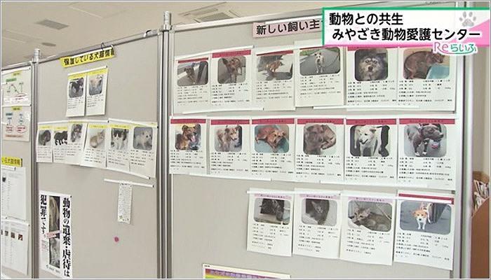 05 月曜から金曜までは施設内の犬や猫を見学できる