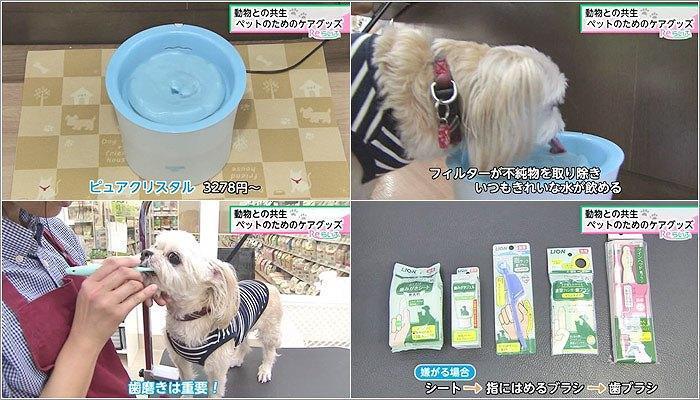 03 ピュアクリスタル/歯磨きグッズ