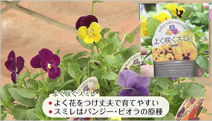 04 よく咲くシリーズ