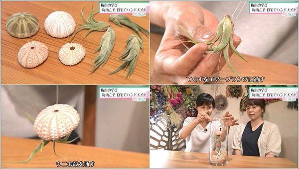 ウニの殻とエアープランツの作り方
