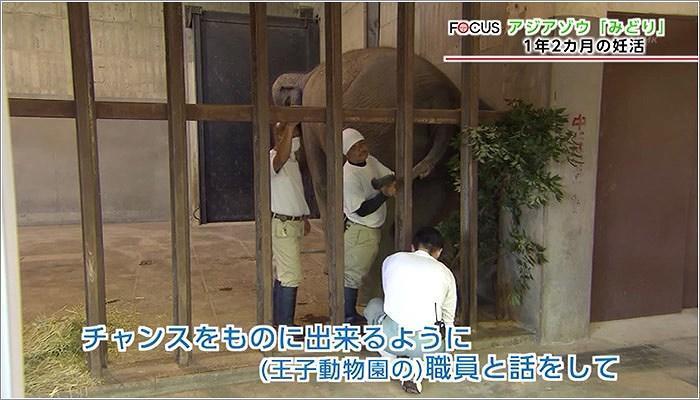07 王子動物園のスタッフと試行錯誤する黒木さん