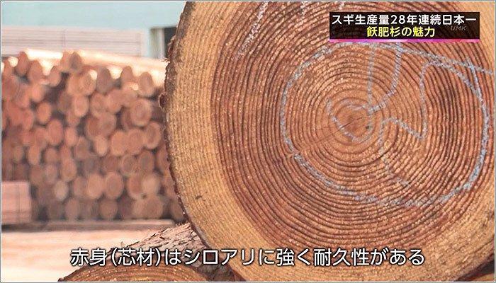 03 飫肥杉の断面