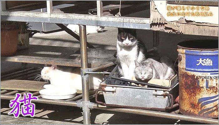 02 島浦の猫たち