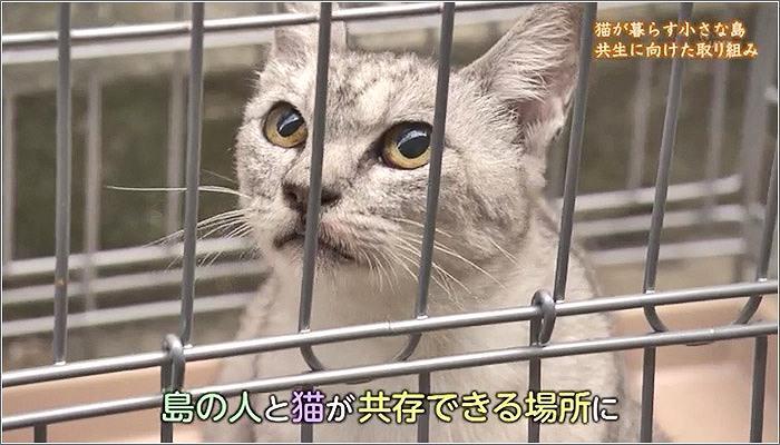 04 保護された猫