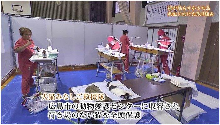 05 猫の手術室の様子