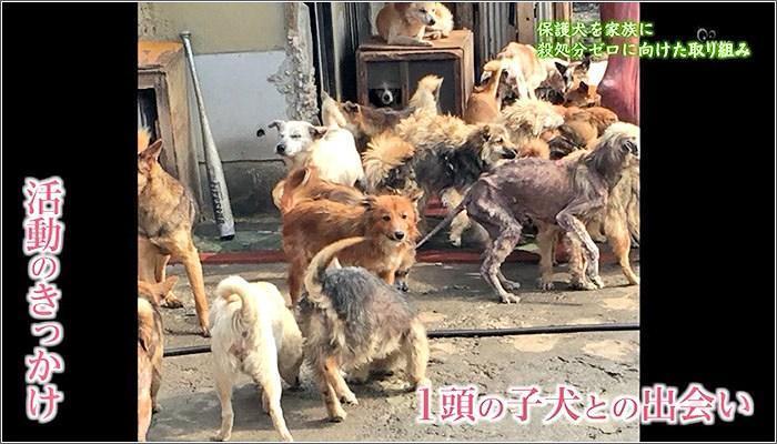 08 たくさんの犬たち