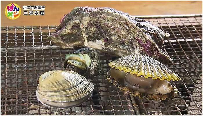 07 ヒオウギ貝やサザエ